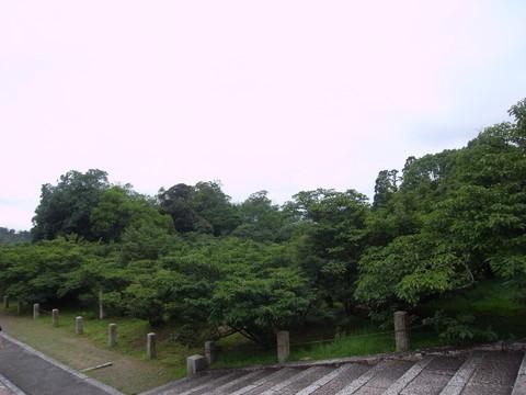 ninnaji_05480.jpg