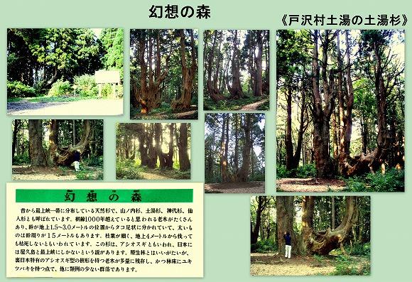 幻想の森の巨木達