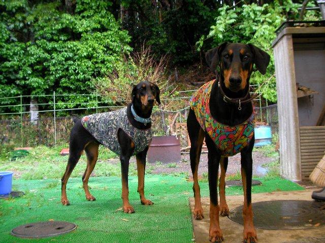 0511雨と犬②