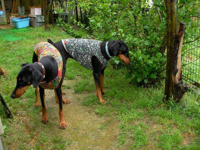 0511雨と犬③