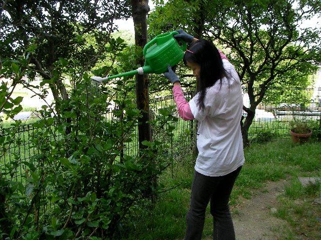 0515木酢水やり①