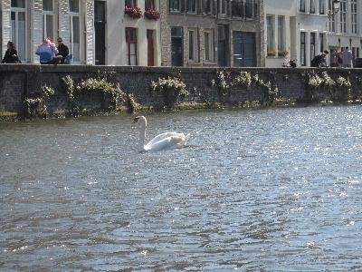 Brugge15
