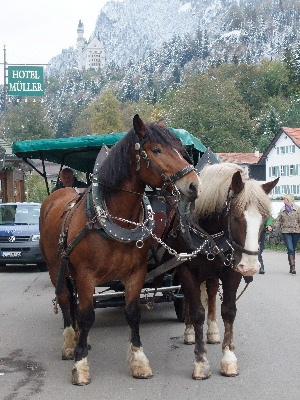 Neuschwanstein200903