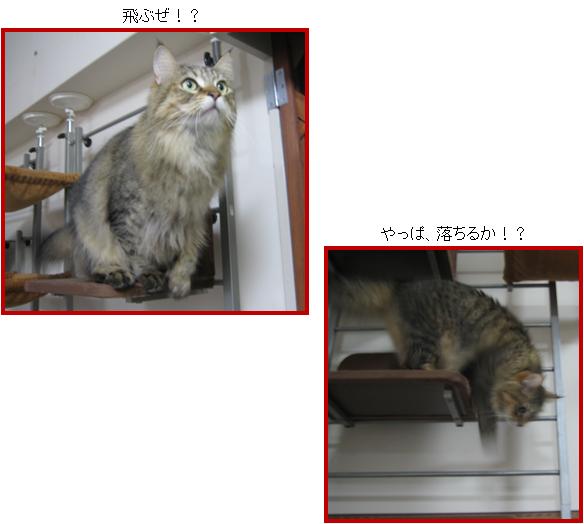 cat8.png