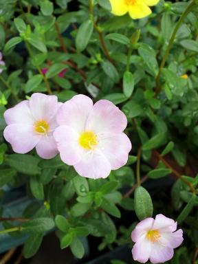 玄関の花9・15 001