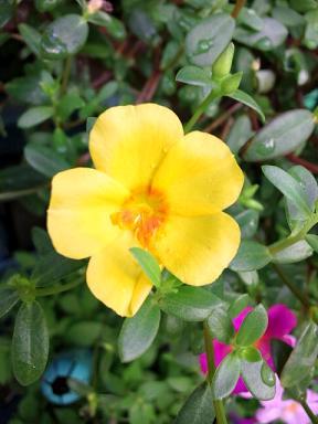 玄関の花9・15 003