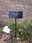 100613 花菜ガーデン3