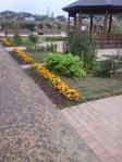 100613 花菜ガーデン
