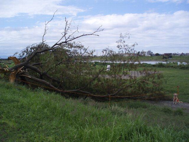 台風15号 多摩川河川敷
