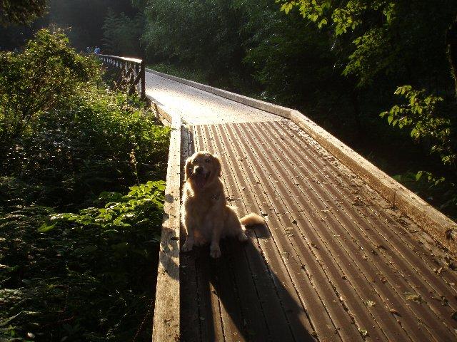 東高根森林公園ウッドコース