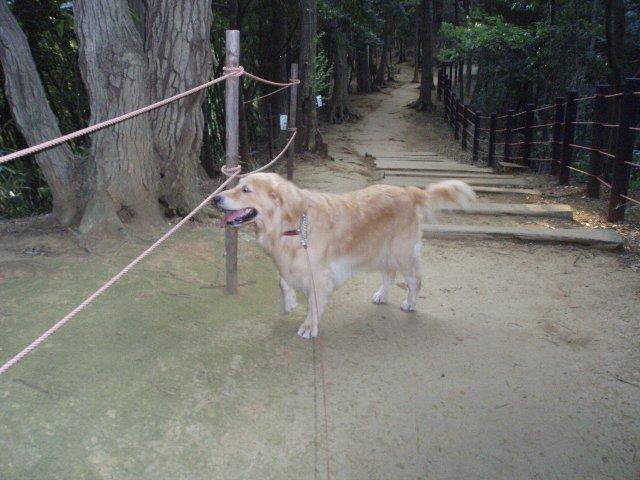 東高根森林公園お山コース