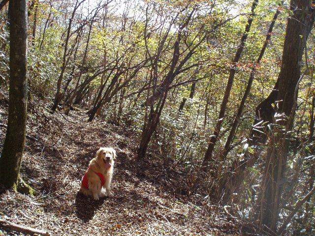 須山口登山歩道3(弁当場~水ヶ塚駐車場)2011.10.28 020