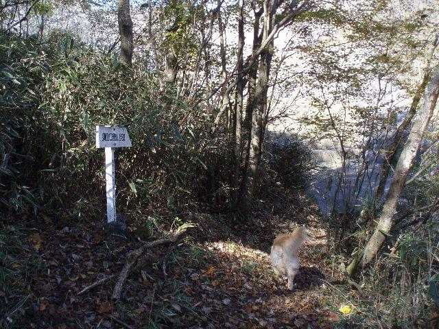 須山口登山歩道3(弁当場~水ヶ塚駐車場)2011.10.28 053