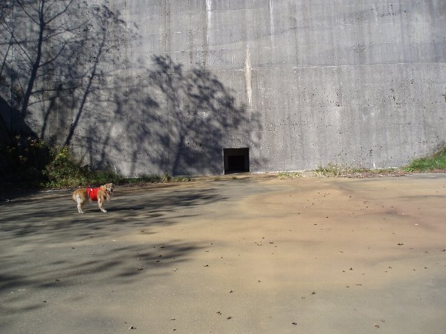 須山口登山歩道3(弁当場~水ヶ塚駐車場)2011.10.28 056
