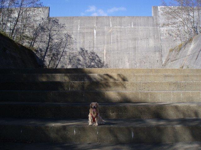 須山口登山歩道3(弁当場~水ヶ塚駐車場)2011.10.28 059
