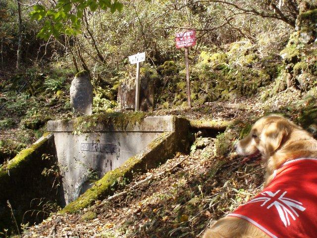 須山口登山歩道3(弁当場~水ヶ塚駐車場)2011.10.28 098