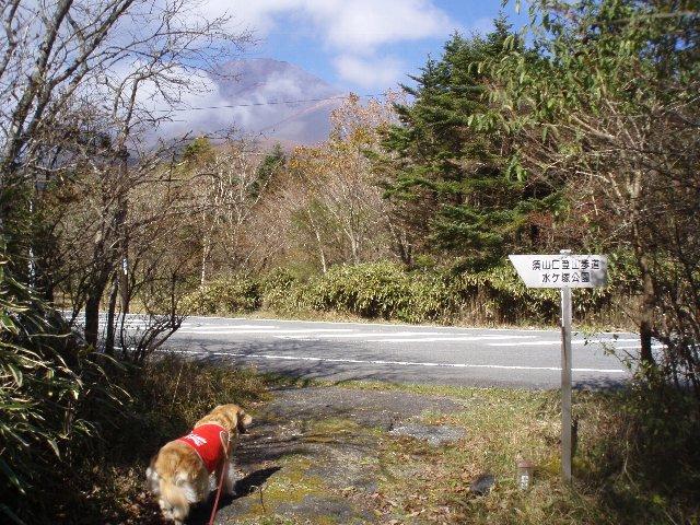 須山口登山歩道3(弁当場~水ヶ塚駐車場)2011.10.28 105