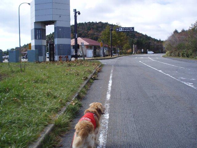 須山口登山歩道3(弁当場~水ヶ塚駐車場)2011.10.28 106