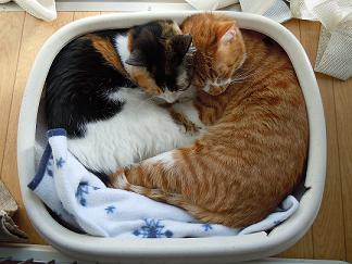 猫団子弁当