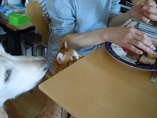 今日の朝ご飯はにゃにかニャ~♪