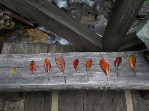 3落ち葉たち