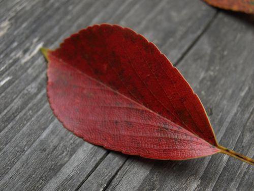 4落ち葉の赤