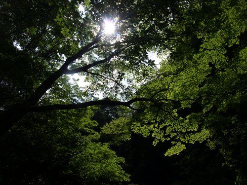 7和合の滝の空