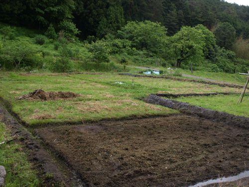 5田の草を刈る