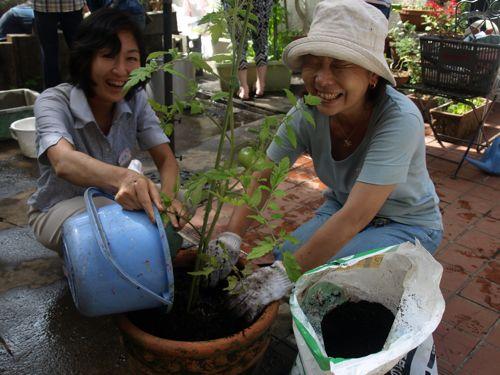 16植木鉢組