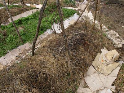 1伸びた刈り草