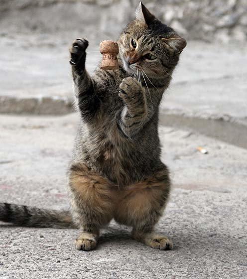 コルクで遊ぶネコ