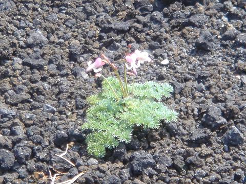2011駒ケ岳2211