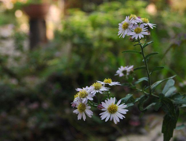 身近に咲く花 015