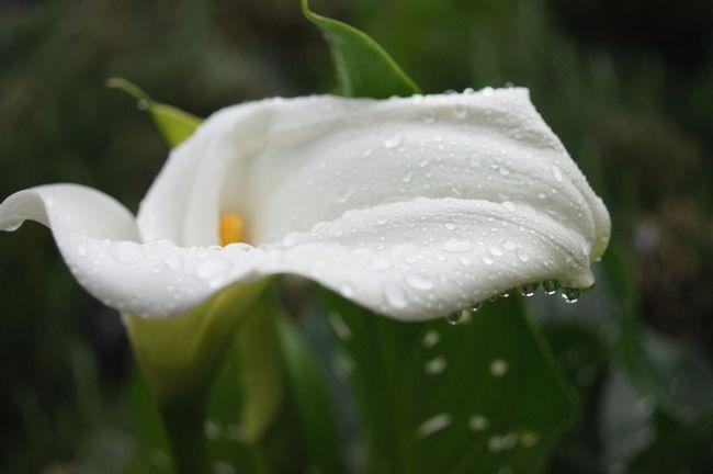 5,10S庭の花 106
