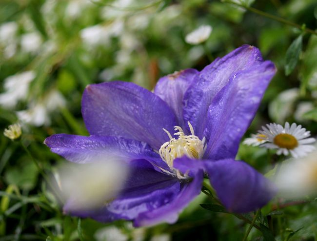 5,12S庭の花 031