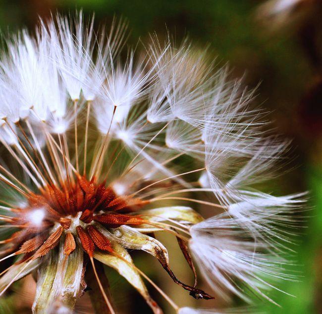 5,10S庭の花 072