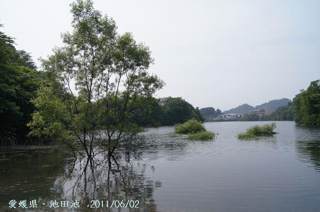 池田池の菖蒲園2