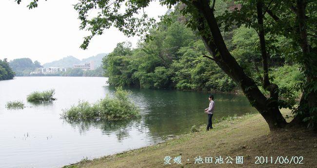 池田池の菖蒲園3