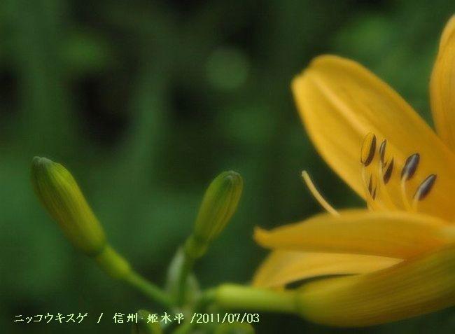 Nikon 057