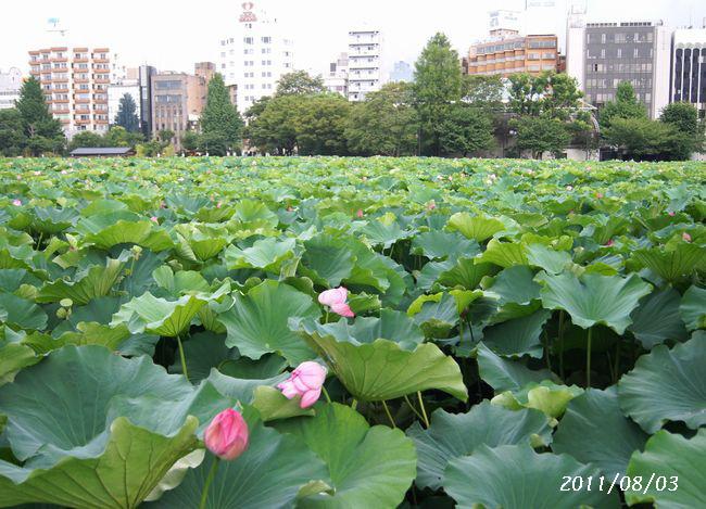 8.3上野へ1