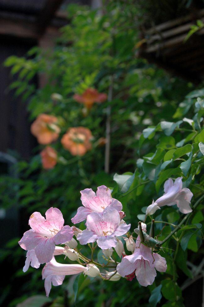 夜桜を撮る 075