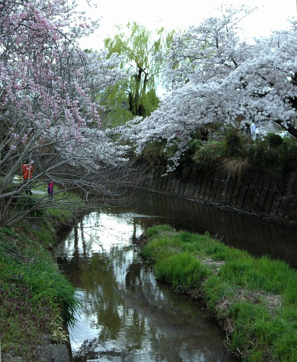 佐保川の堤2