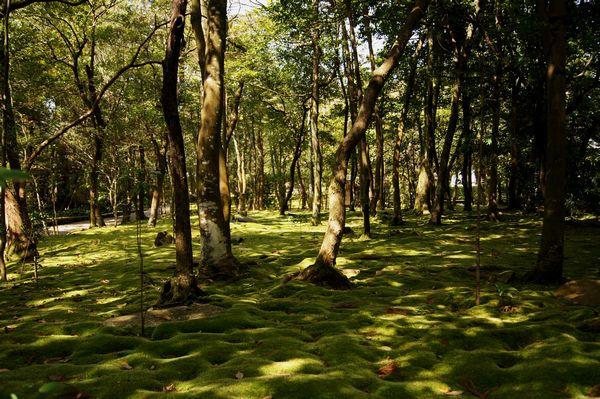 秋篠寺庭園4