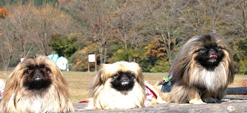 2009-11-12-aisatu.jpg