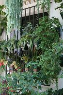 S ミハス 庭 植木