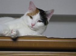 逃げる日本猫