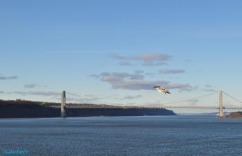ジョージワシントンブリッジと鳥