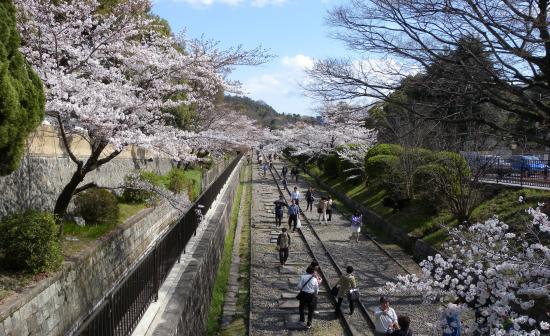 インクライン 桜