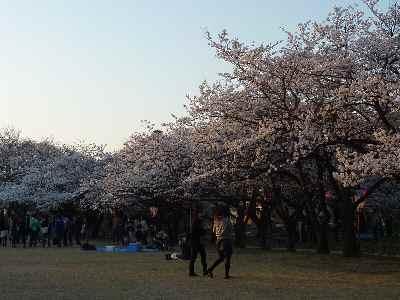 2011花見01