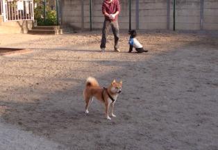 パパ、ボール投げて